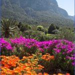 trip to kirstenbosch national botanical garden 10 150x150 Trip To Kirstenbosch National Botanical Garden