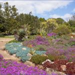 trip to kirstenbosch national botanical garden 14 150x150 Trip To Kirstenbosch National Botanical Garden