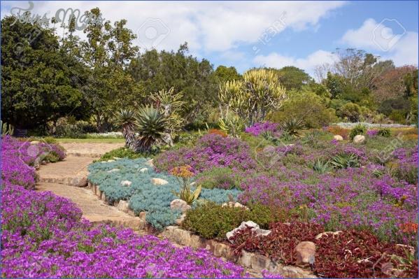 trip to kirstenbosch national botanical garden 14 Trip To Kirstenbosch National Botanical Garden