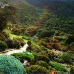 trip to kirstenbosch national botanical garden 5 150x150 Trip To Kirstenbosch National Botanical Garden