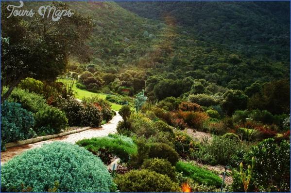trip to kirstenbosch national botanical garden 5 Trip To Kirstenbosch National Botanical Garden