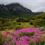 trip to kirstenbosch national botanical garden 6 150x150 Trip To Kirstenbosch National Botanical Garden