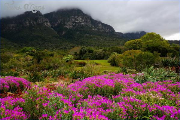 trip to kirstenbosch national botanical garden 6 Trip To Kirstenbosch National Botanical Garden