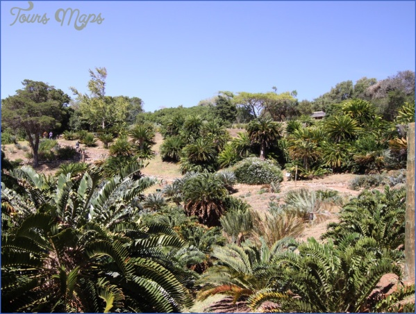 trips to kirstenbosch national botanical garden package 11 Trips To Kirstenbosch National Botanical Garden Package