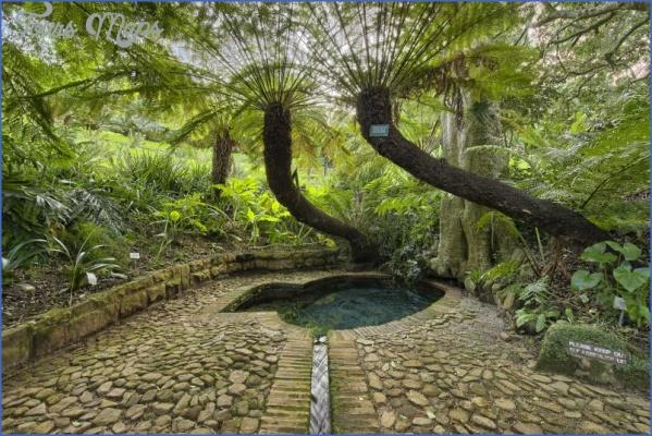 trips to kirstenbosch national botanical garden package 6 Trips To Kirstenbosch National Botanical Garden Package