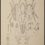 tydeus diomedes 13 150x150 Tydeus & Diomedes