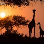 Africa Safari Travels_11.jpg