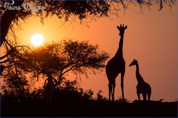 africa safari travels 11 Africa Safari Travels