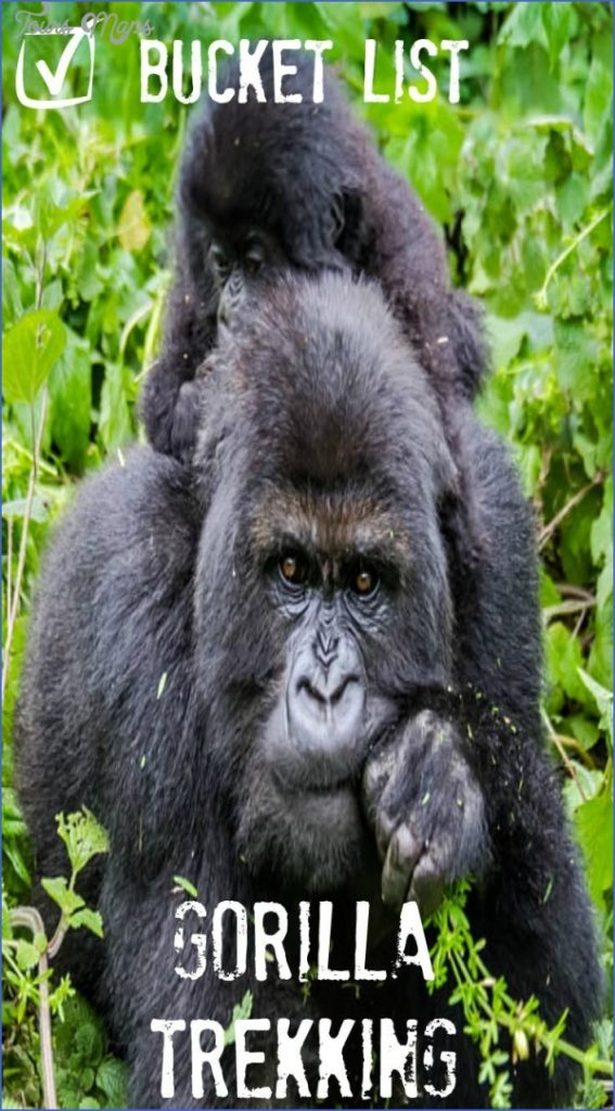 Gorilla Trek Africa Safari Travel_1.jpg