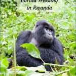 Gorilla Trek Africa Safari Travel_12.jpg