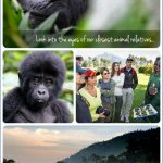 Gorilla Trek Africa Safari Travel_6.jpg