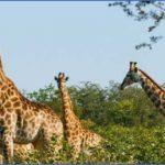 Kruger National Park_0.jpg