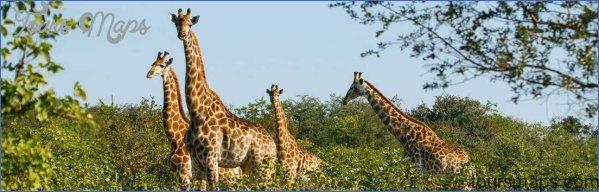 kruger national park 0 Kruger National Park