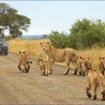 Kruger National Park_1.jpg