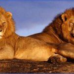 kruger national park 10 150x150 Kruger National Park