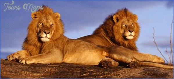 kruger national park 10 Kruger National Park