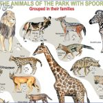 kruger national park 11 150x150 Kruger National Park