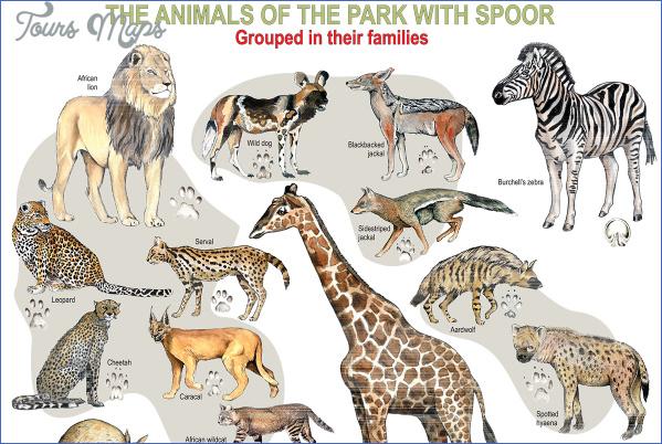 kruger national park 11 Kruger National Park