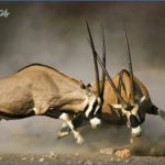 Kruger National Park_14.jpg