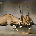kruger national park 14 150x150 Kruger National Park