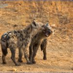 Kruger National Park_4.jpg