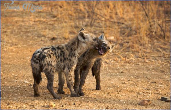 kruger national park 4 Kruger National Park