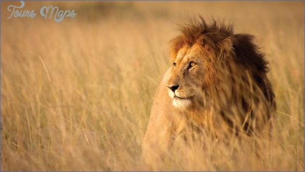kruger national park 5 Kruger National Park