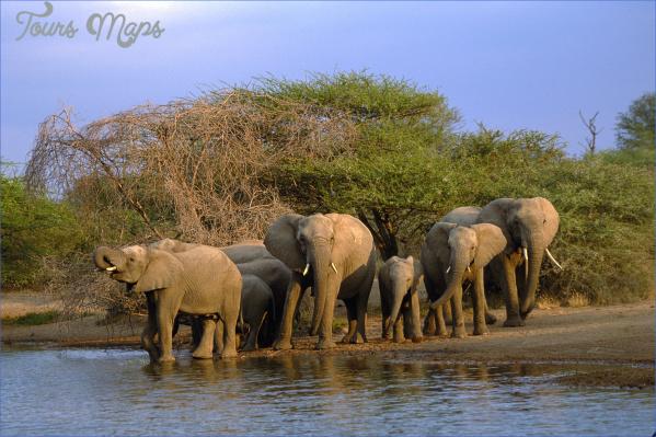 kruger national park 6 Kruger National Park