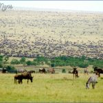 masai mara 11 150x150 Masai Mara