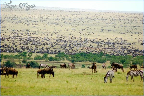 masai mara 11 Masai Mara