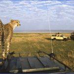 masai mara 12 150x150 Masai Mara
