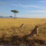 masai mara 13 150x150 Masai Mara