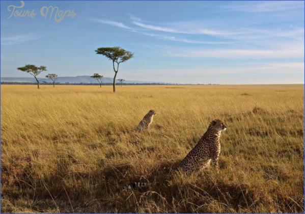 masai mara 13 Masai Mara