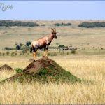 masai mara 14 150x150 Masai Mara