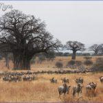 masai mara 2 150x150 Masai Mara