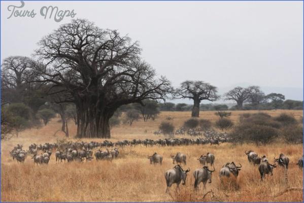 masai mara 2 Masai Mara