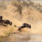 masai mara 7 150x150 Masai Mara