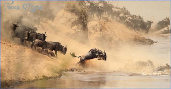masai mara 7 Masai Mara
