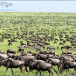 The Serengeti_10.jpg