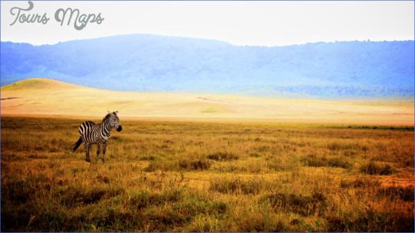 the serengeti 13 The Serengeti