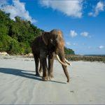andaman islands 1 150x150 10 Best Travel Destinations 2018