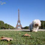 Best Travel Destinations With A Dog_2.jpg