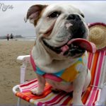 bulldog on san diego beach w4lrwr 150x150 Best Travel Destinations With A Dog
