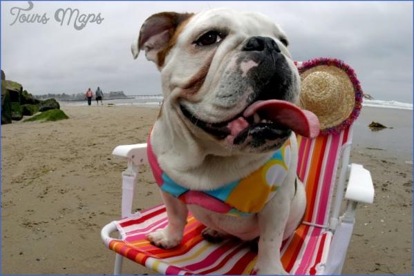 Bulldog-on-San-Diego-beach_w4lrwr.jpg
