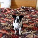 dog friendly hotels dogfriend0116 itok85khril5 150x150 Best Travel Destinations With A Dog