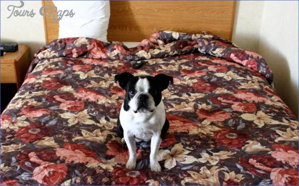 Dog-friendly-hotels-DOGFRIEND0116.jpg?itok=85KhrIL5