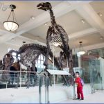 kids museum natural history w710 h473 150x150 BEST MUSEUMS IN NEW YORK