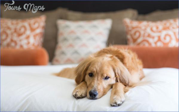 Knobhill-dog-friendly-hotels-PUP0516.jpg?itok=glz-iPRc