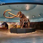 mammoth1 150x150 BEST MUSEUMS IN LA