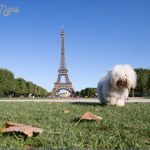 paris best dog friendly destinations in europe copyright yongyot therdthai european best destinations 150x150 Best Travel Destinations With A Dog
